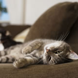 Top tips for finding accommodation with pets